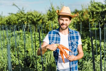 farmer holding organic carrots in field