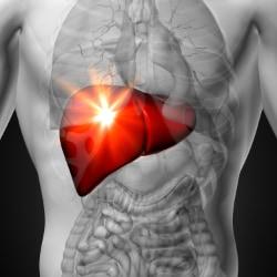 illustration of male liver