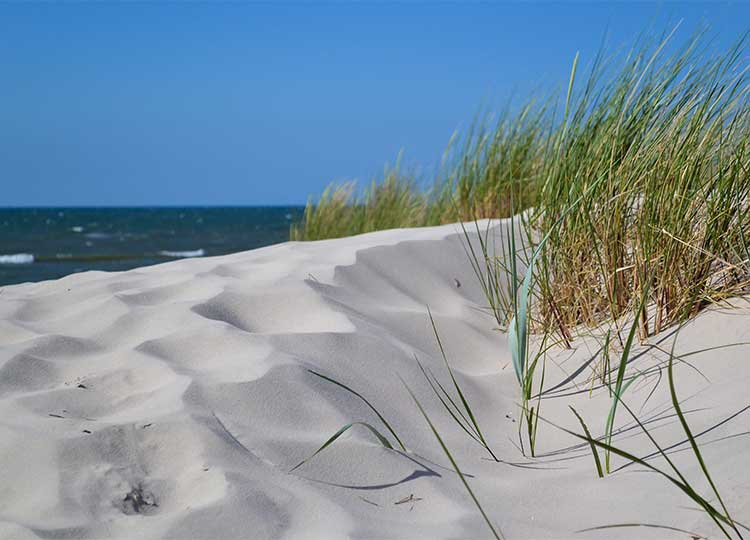 sea grass on dune over ocean